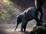 Elefantes contra el cancer