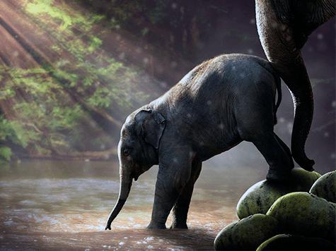 Elefantes contra el cáncer