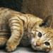 gatos y la cocina judía