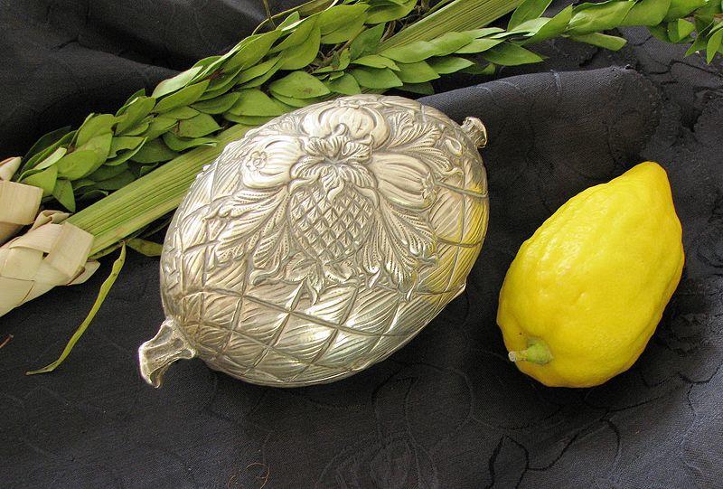 Etrog, la fruta china que se volvió símbolo de Sucot y del pueblo judío
