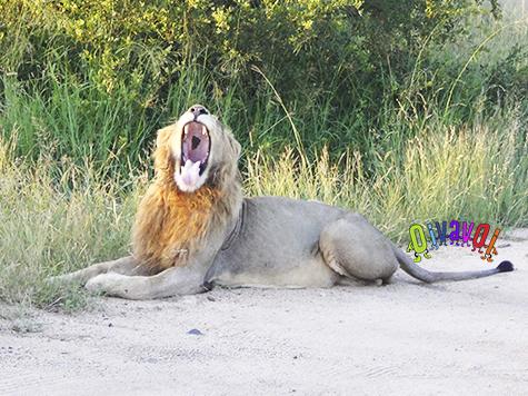 Te mostramos las maravillas del parque Kruger y, además, te damos unos consejos que te vendrán muy bien para planificar tu visita