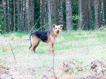 El perro Bobby, el último ser humano en la Alemania nazi