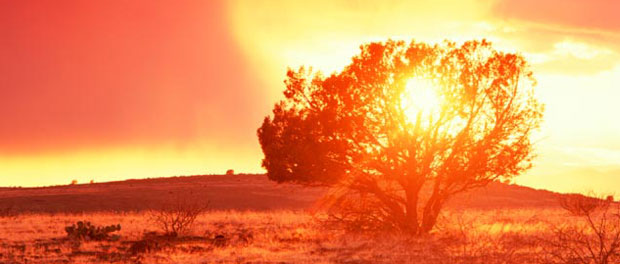 ¿Una planta que arde sin consumirse nunca? ¿Es eso posible? La ciencia da una respuesta...