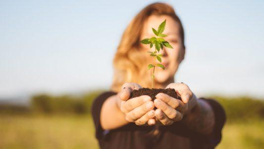 Investigadores israelíes anunciaron recientemente que están estudiando el uso de cannabis medicinal para tratar la endometriosis, la segunda condición ginecológica más frecuente...