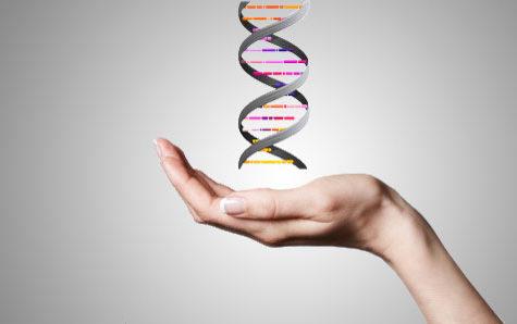 Un estudio israelí sugiere que las neuronas, y no solo el ADN, pueden afectar el destino de la descendencia