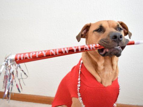 En la tradición judía, los animales también tienen su año nuevo
