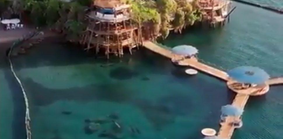 Delfines en Eilat