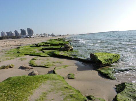 Ashdod, la ciudad más ecológica del Mediterráneo según la ONU