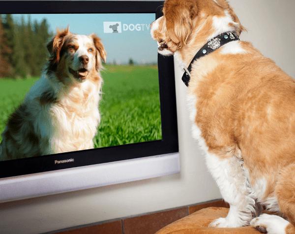 DogTV, para que tu perro no se sienta solo