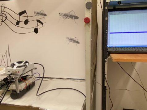 Israel: conectan un oído de langosta a un robot para crear tecnología parte animal y parte máquina