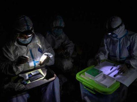 ¿Quiénes combaten mejor las pandemias: los murciélagos o los seres humanos?