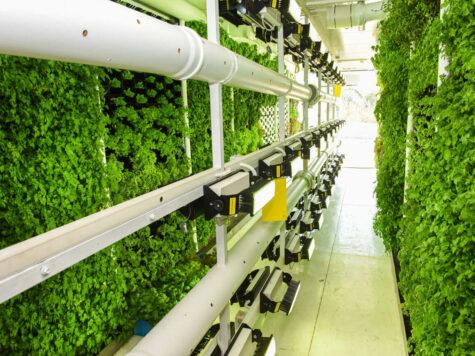 Granjas verticales: tu próxima ensalada se cultiva en la pared